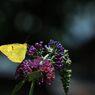 輝く黄色  DSC_3127