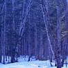 桜前線が北海道のずっと南にあった頃2