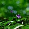 森に咲く星 愛らしい心Ⅱ