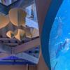 癒しの水族館9
