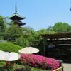 上野の遅咲き牡丹展で撮影