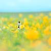 黄色い高原
