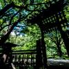 灼熱@彼我庭園(横浜公園)