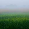 霧の晴れ間