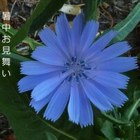 花 植物 6