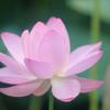 花便り - 初々しく輝く -