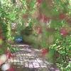 萩のトンネル13