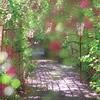 萩のトンネル14