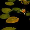 花と葉と影