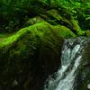 苔を潤す清流