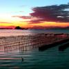 波紋とサギが魅せる牡蠣棚