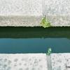 池の飛び石の写真