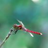 ― 秋 ・赤蜻蛉 ―
