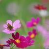花のささやき2