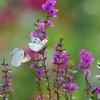 花のささやき3
