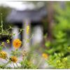 「秋雨」小江戸川越散歩189