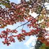 小さい秋見つけた 雲場池にて 2