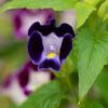 小粒な可愛い花
