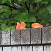 塀の上から・・こんにちは~^^
