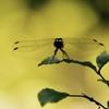 夏から秋へ蜻蛉と一緒