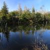 まいめの池・4