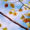 秋 色 ♪