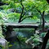旧古河庭園のみどり