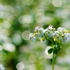 蕎麦の花香る(6)