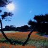 秋の陽射しとキバナコスモス