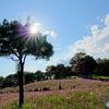 秋晴れの花の丘