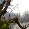 枝木と日が指す時。