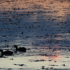 夕焼けに染まる湖