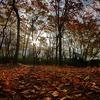 秋色の日差し