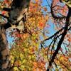 秋空のメッセージ