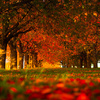 桜並木の秋