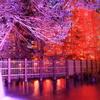 紅葉@神戸市立森林植物園5