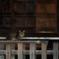 Le chat dans le temple aux chats la nuit