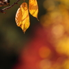 紅葉と黄葉