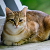 吾輩は猫である、ニャー # 296