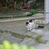 吾輩は猫である、ニャー # 298