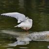 片翼の翼…①