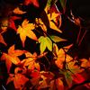 秋の定番カラー