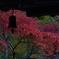 高山寺と紅葉