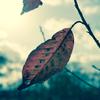秋よさようなら