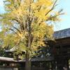 黄色い絨毯の上を散策(^^)/