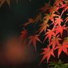 秋の陽ざし