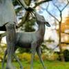 公園の子鹿