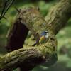 「初撮り青い鳥」