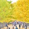立川銀杏黄葉