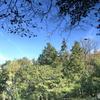 池の中の森